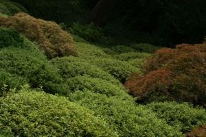 leafy-green.jpg
