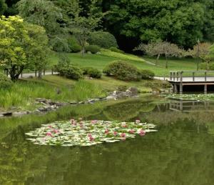 lotus-pond.jpg